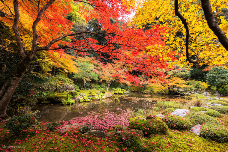 Japán az egyszerű tervezésű kertjeiről híres, amiknél olyan természetes anyagokat használtak, mint a homok vagy a kövek, hogy kiemeljék a növények egyedi szépségét