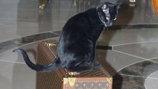 Egy nő macskát csempészett fel a repülőre, leszállíttatták