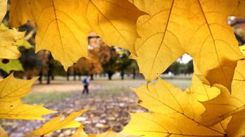24 fokos nappali melegekkel ér véget az október