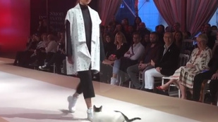 Amikor egy macska trollkodja szét a divatbemutatót
