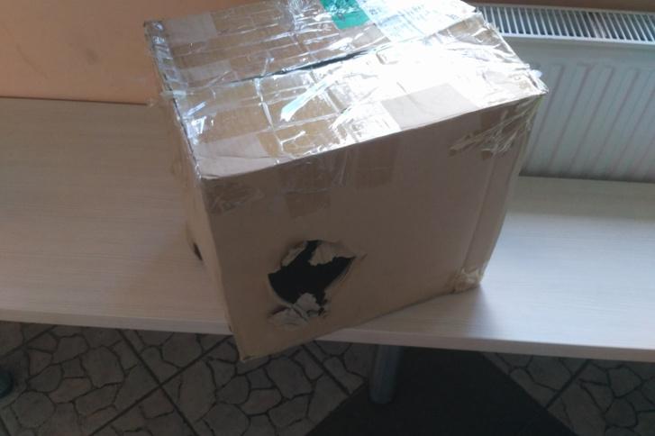 kutyas doboz