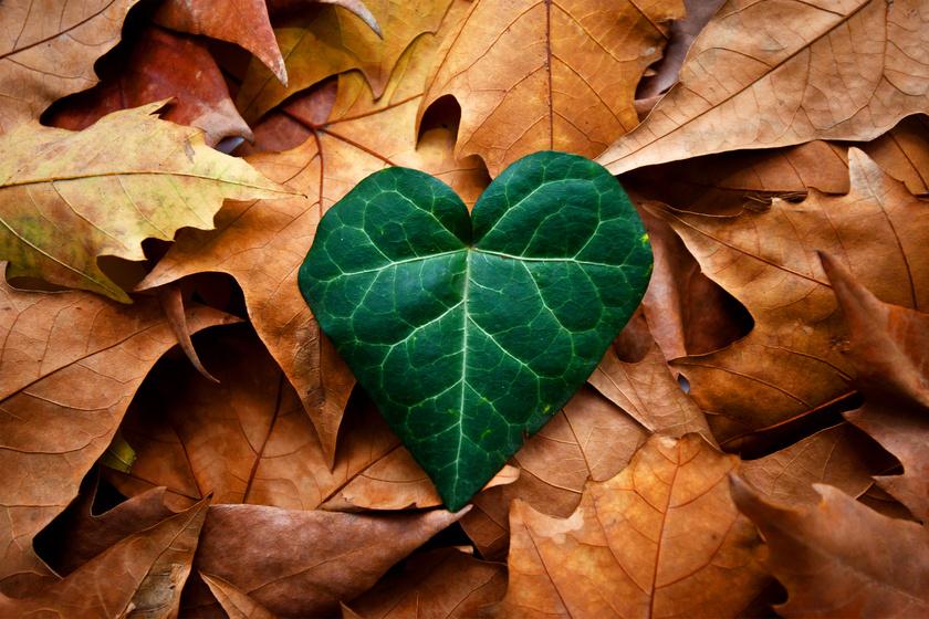 Novemberi szerelmi horoszkóp: új fejezet a szívügyekben