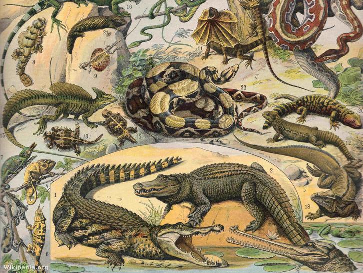 """Hüllők illusztráció a """"Nouveau Larousse Illustré""""-ből (1897-1904)"""