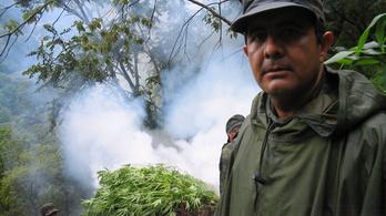 Alkotmányellenes a marihuána teljes tilalma Mexikóban