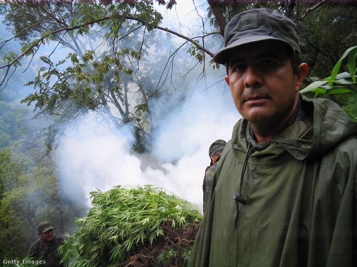Hugo de la Rosa és csapata marihuánaültetvényt számol fel Mexikóban 2009-ben