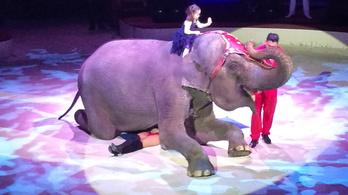 Portugáliában is betiltják a vadállatok cirkuszban való szerepeltetését