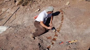 Új dinoszauruszfajt fedeztek föl Argentínában
