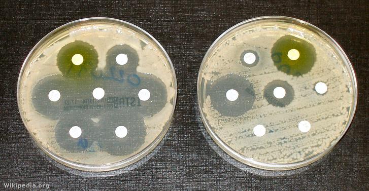 Antibiotikum-rezisztencia tesztek