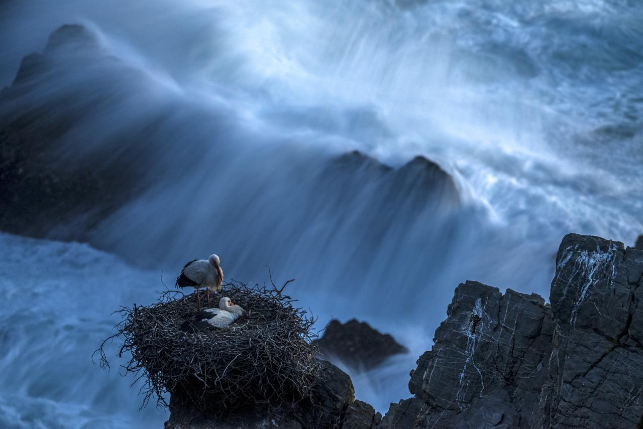 Állatok és környezetük - Dícséretre méltó - Násfay Krisztina: Végvár -                          A tengerparti sziklákon fészkelő fehér gólyákat Portugália nyugati partjainál fotóztam tavaly tavasszal. A késő délutáni időszakban olyan viharos szél fújt, hogy lesúlyozott állványról sem lehetett rázkódásmentes képeket készíteni. Végül a szél csendesültével az esti kék óra utolsó fényeit próbáltam kihasználni, hogy egy hosszú záridős felvételen a fészekre visszatérő gólyákat és közvetlen környezetüket, a hevesen hullámzó óceánt is megmutassam.