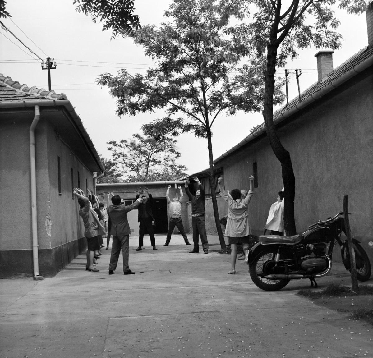 """Ifj. Kartács Béla gondolt egy nagyotA Bambuszrügy Magyar-Vietnami Barátság Mgtsz évről évre romló hatékonysággal működött. A dolgozók több időt és energiát fordítottak a hétvégi veteményeskertre, mint a szövetkezet gazdagítására, a munkaverseny már annyi embert se érdekelt, mint a menzán Toldiné Icuka dekoltázsa, pedig Toldiné Icuka egyöntetű vélemények szerint a legcsúnyább asszony volt a faluban.                          A hanyatlást és pangást látva kereste fel ifj. Kartács Béla a téeszelnökhöz, hogy lenne neki egy ötlete a dolgozók ösztönzésére. """"Az elején nem fognak örülni, de tudja, milyenek a magyar parasztok, semminek nem tudnak, ha kapnak egy zsák búzát, akkor is azon sírnak, miért nem kettőt."""" A téeszelnök hülyeségnek tartotta az ötletet, de jobb terve nem lévén, beleegyezett. Ifj. Kartács másnaptól minden reggel kivezényelte kiscsoportos foglalkozásra a kollektívát, és mindenkinek meg kell mutatnia, hány százalékot teljesített a tervből, és mennyit akar másnapra teljesíteni.A kísérlet tényleg megbukott, pár napon belül az egész téesz felmondással fenyegetőzött. Egyetlen hozadéka az volt, hogy meglátta az egyik reggel a csoportot egy, a falun épp átautózó híresség. """"Ezt lopom"""", mondta magában, mert ez szokása volt (mármint ennek mondogatása). És nemsoká új műsor kezdődött a tévében."""