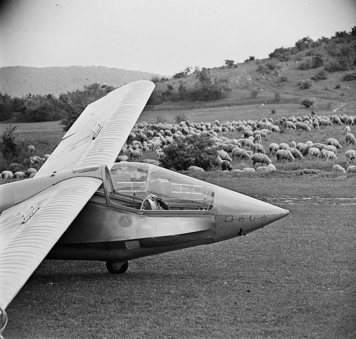 (Rubik) R-26 Góbé vitorlázó repülőgép az alsó repülőtéren, háttérben a Vöröskövár szélével és a reptér füvét nyíró birkanyájjal. Hármashatár-hegy,1968.                         Ja, hogy ne itt tegyem le, hanem ott a Vöröskővár alatti nagy réten! Igaza lesz, ott nincs domboldal ami belezavarna. Hepehupás meg tele van ürgelyukkal. Na, végre sikerült! Szeretem, amikor csúszik a gép a talpán, és nagyokat ugrik.