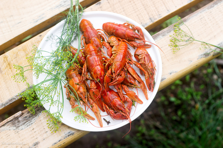 A svédek rákpartival ünneplik meg a nyár végét, amit orkräftskivatnak neveznek