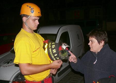 Végül egy fáról hozták le a szökevényt (Fotó: Agria Speciális Mentő és Tűzoltó Csoport / heol.hu)