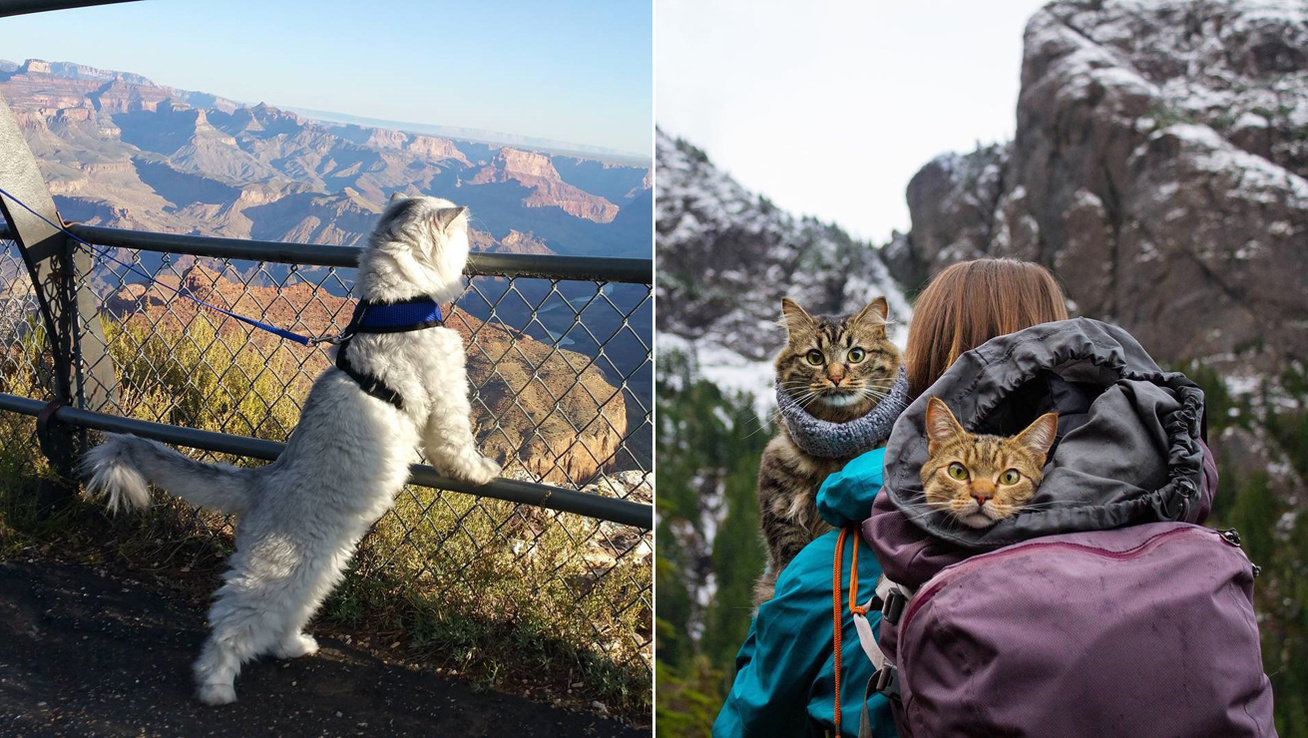 macskak-utazas