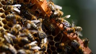 Korlátozzák a méheket pusztító növényvédőket