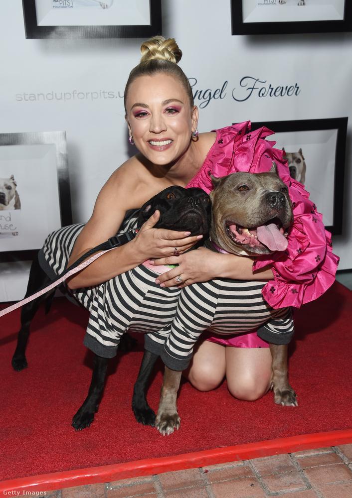 A Stand Up For Pits egy olyan nonprofit szervezet, amely a pitbullok érdekvédelmével foglalkozik, illetve küzd a kutyaviadalok ellen is