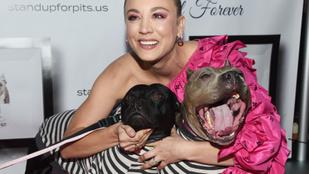 Kaley Cuoco ennyire szereti a pitbullokat