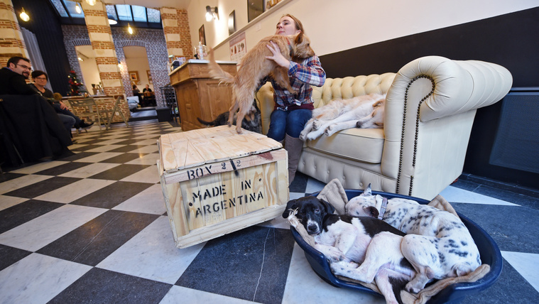 Here are the best dog-friendly businesses of Hungary!