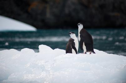 antarktisz (3)