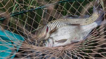 A tavainkban és a halainkban is rengetegféle vegyszer van