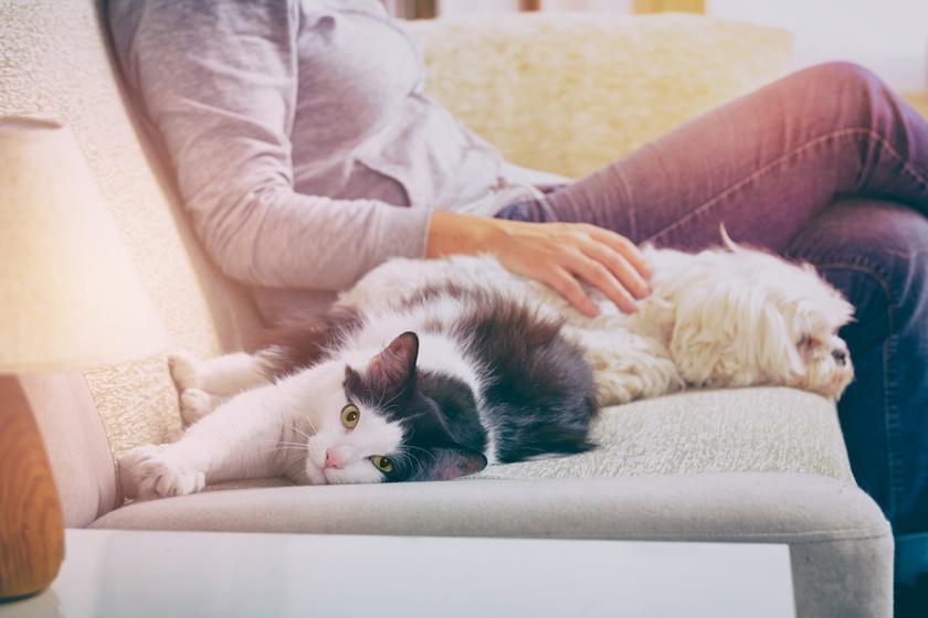 Nem lesz többé kutyaszőr a kanapén: mutatjuk a megoldást