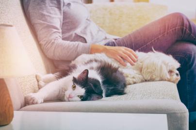 kutya-macska-kanape