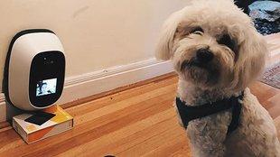 Végre videótelefonálhatsz a kutyáddal