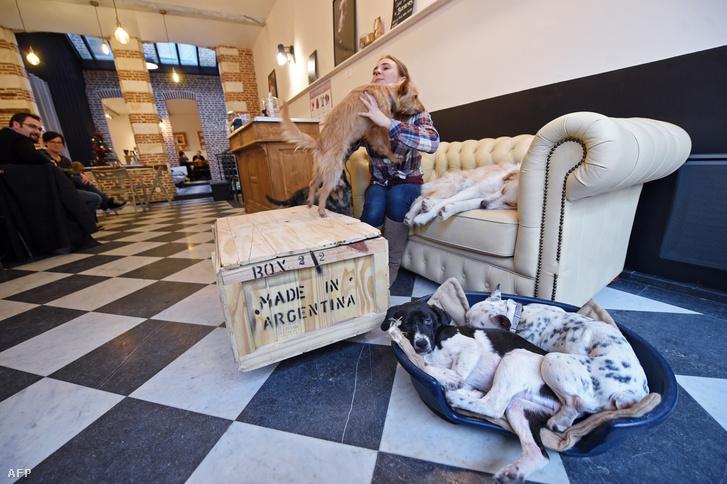 Dog bar in Lille, France