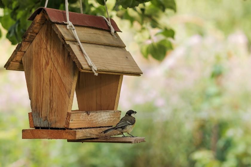 Meg is ölheted vele a madarakat a kertben: ezt soha ne tedd az etetőbe