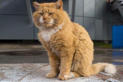 voros macska 1