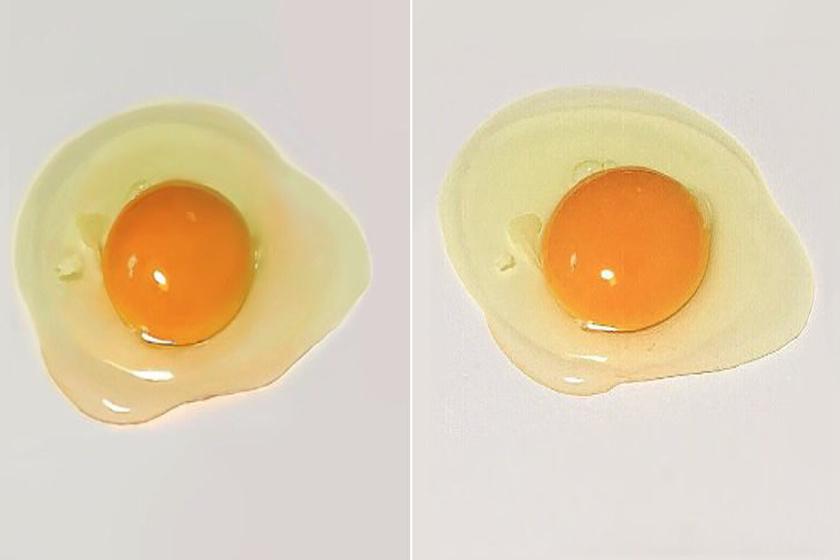 Két tojás van a képen, de csak az egyik igazi: kitalálod, melyik?