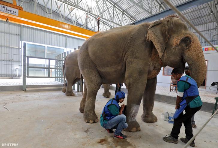 Röntgent készítenek az elefánt lábáról, India első elefánt kórházában 2018. november 16-án