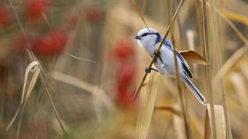 Új madárfaj tette tiszteletét hazánkban