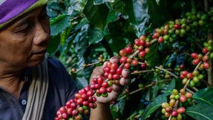 Egy író személyesen köszönte meg mindenkinek, aki hozzájárult a kávéjához
