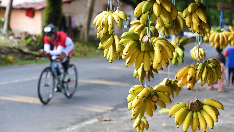 Végveszélyben a banán, megmenthetnénk, de nem tesszük
