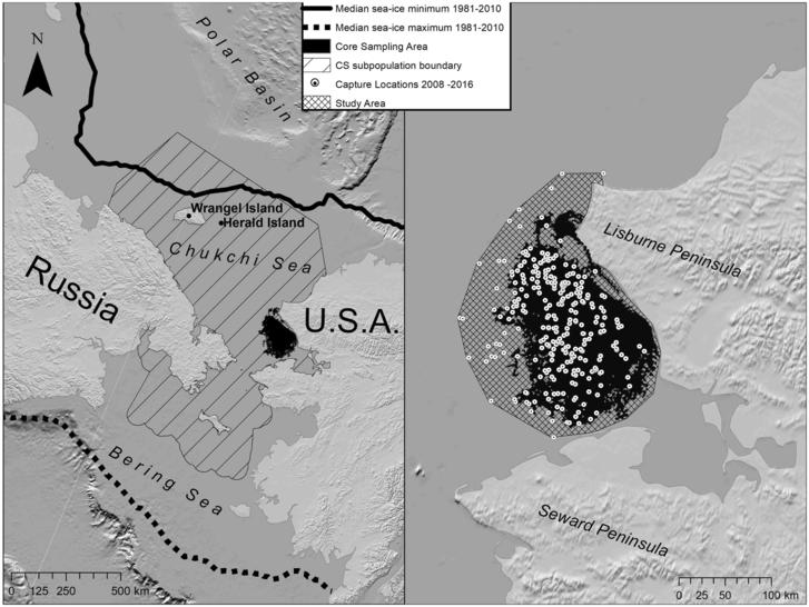 A kutatók által tanulmányozott jegesmedve-populáció élőhelye