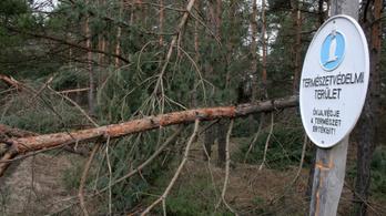 Greenpeace: A környezetvédelmi szakemberek felét elbocsátották
