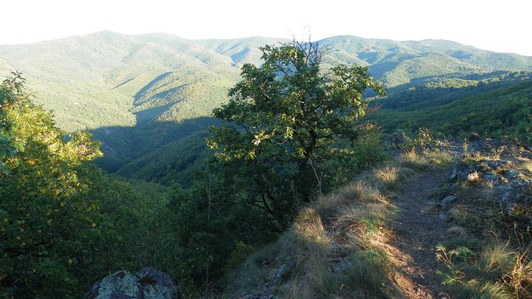 Tönkreteheti-e egy kisvasút a börzsönyi Csarna-völgyet?