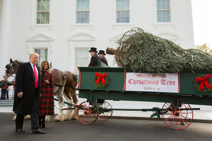 A Fehér Ház karácsonyfája idén is a szokásos, ünnepélyes keretek között érkezett meg a helyszínre, lovaskocsin.