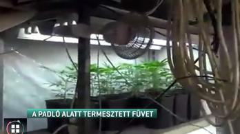 Tanyája alatt termesztett marihuánát a téglási férfi