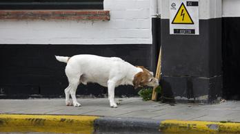 A kutyák tudják, ha nem tudnak valamit