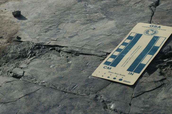 smallest-dinosaur-tracks-3