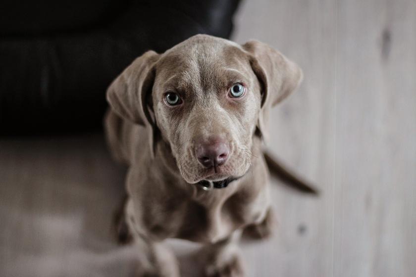 Jutalmat rejtettek a fal mögé, és vártak: a kutyák reakciója lenyűgözte a tudósokat