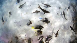 Valóra vált filmek: 4 év után tényleg cápák hullottak az égből