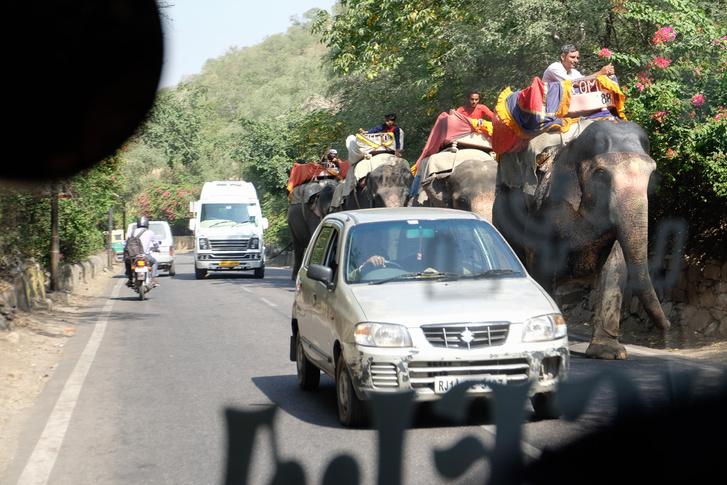 Az elefántok tartják be legjobban a közlekedési szabályokat