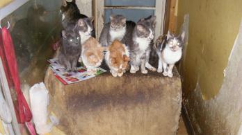 Vádemelés: húgyszagú lakásban zsúfolták össze a fülatkás macskákat
