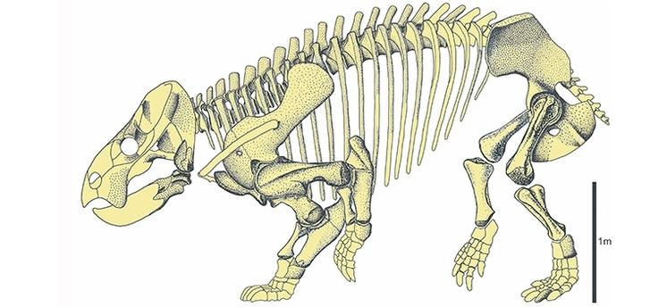 A Lisowicia bojani rekonstruált csontváza