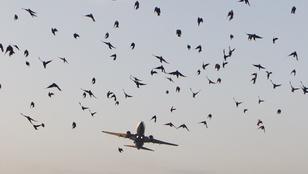 A NASA csirkeágyút fejlesztett a repülők töréstesztjéhez