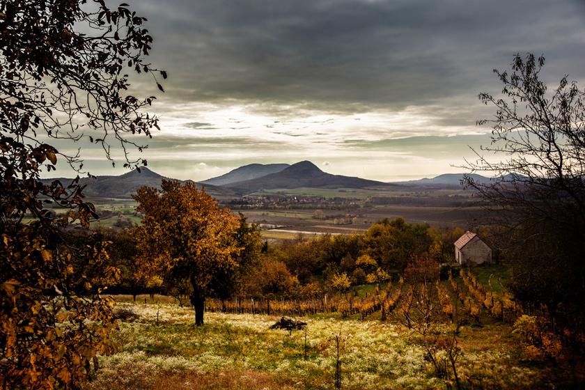A hangulatos magyar szőlőhegyen igazi kikapcsolódás vár: csodás borokat kóstolhatsz