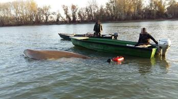 Horgászokat mentettek a vizirendőrök a Tiszából
